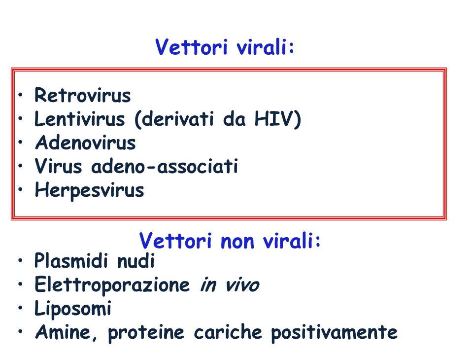 Retrovirus Lentivirus (derivati da HIV) Adenovirus Virus adeno-associati Herpesvirus Plasmidi nudi Elettroporazione in vivo Liposomi Amine, proteine c