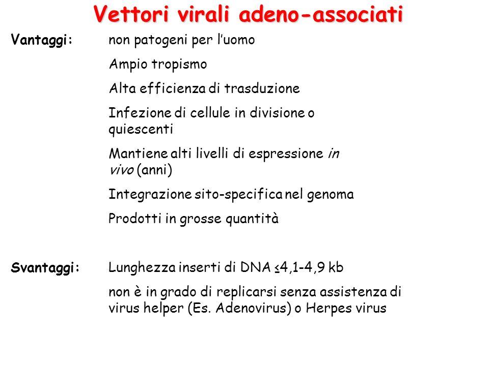 Vantaggi: non patogeni per luomo Ampio tropismo Alta efficienza di trasduzione Infezione di cellule in divisione o quiescenti Mantiene alti livelli di