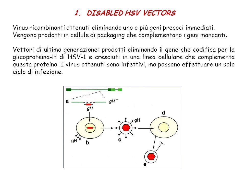 1.DISABLED HSV VECTORS Virus ricombinanti ottenuti eliminando uno o più geni precoci immediati. Vengono prodotti in cellule di packaging che complemen