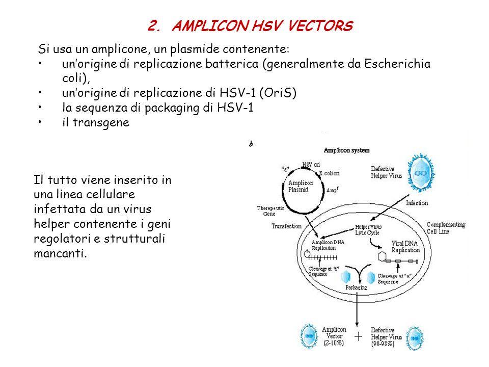 2.AMPLICON HSV VECTORS Si usa un amplicone, un plasmide contenente: unorigine di replicazione batterica (generalmente da Escherichia coli), unorigine