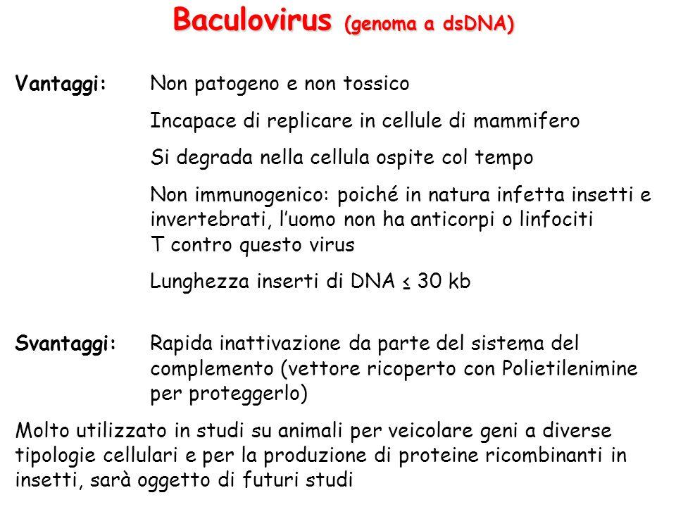 Baculovirus (genoma a dsDNA) Vantaggi:Non patogeno e non tossico Incapace di replicare in cellule di mammifero Si degrada nella cellula ospite col tem
