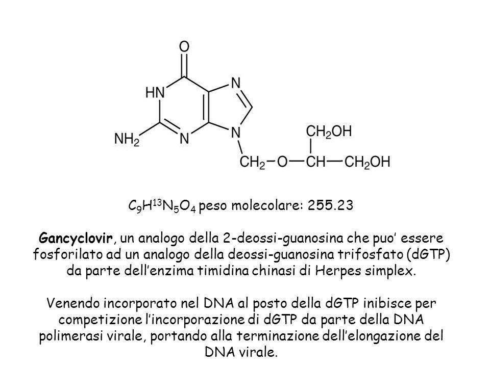 C 9 H 13 N 5 O 4 peso molecolare: 255.23 Gancyclovir, un analogo della 2-deossi-guanosina che puo essere fosforilato ad un analogo della deossi-guanos