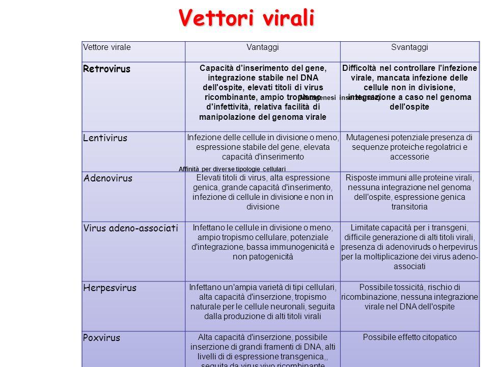 Caratteristiche del vettore ideale per la TERAPIA GENICA Efficiente (trasdurre un numero di cellule elevato).