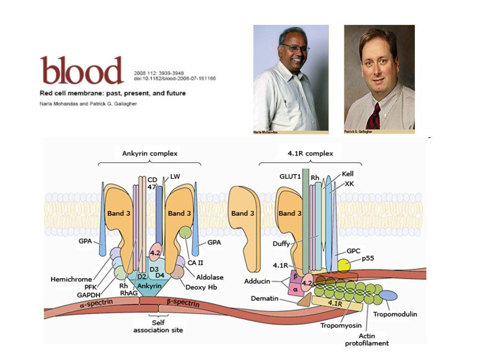 Inattivazione dei patogeni Allinizio degli anni 80 la quasi totalità dei pazienti che impiegavano i concentrati dei fattori della coagulazione – ottenuti da pool di plasma umano – si infettavano con gli agenti virali (HBV / nAnBV) causa di devastanti sindromi epatiche … da cui i primi tentativi di inattivazione virale … Con lavvento dellepidemia HIV le tecniche di inattivazione virale vennero applicate sistematicamente … In questi ultimi anni le tecniche di inattivazione dei patogeni hanno raggiunto un elevato grado di sicurezza, di pari passo con i nuovi esami di validazione biologica