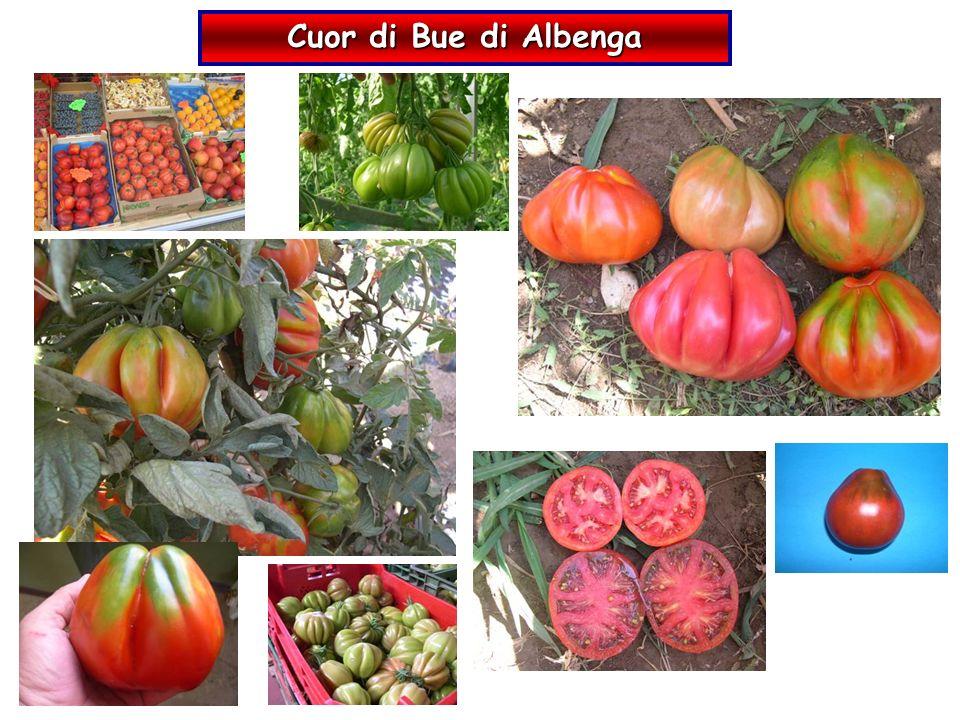Cuor di Bue di Albenga