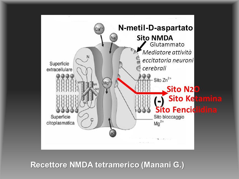 Sito NMDA Sito N 2 O Sito Fenciclidina Sito Ketamina Recettore NMDA tetramerico (Manani G.) N-metil-D-aspartato Glutammato Mediatore attività eccitatoria neuroni cerebrali (-)