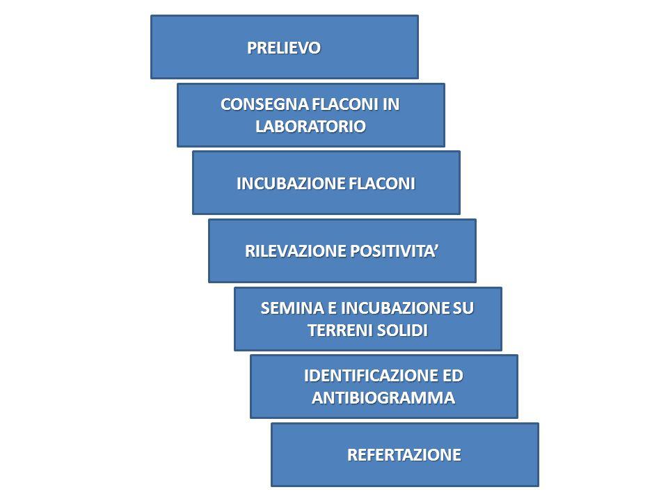 PRELIEVO CONSEGNA FLACONI IN LABORATORIO RILEVAZIONE POSITIVITA SEMINA E INCUBAZIONE SU TERRENI SOLIDI IDENTIFICAZIONE ED ANTIBIOGRAMMA REFERTAZIONE I