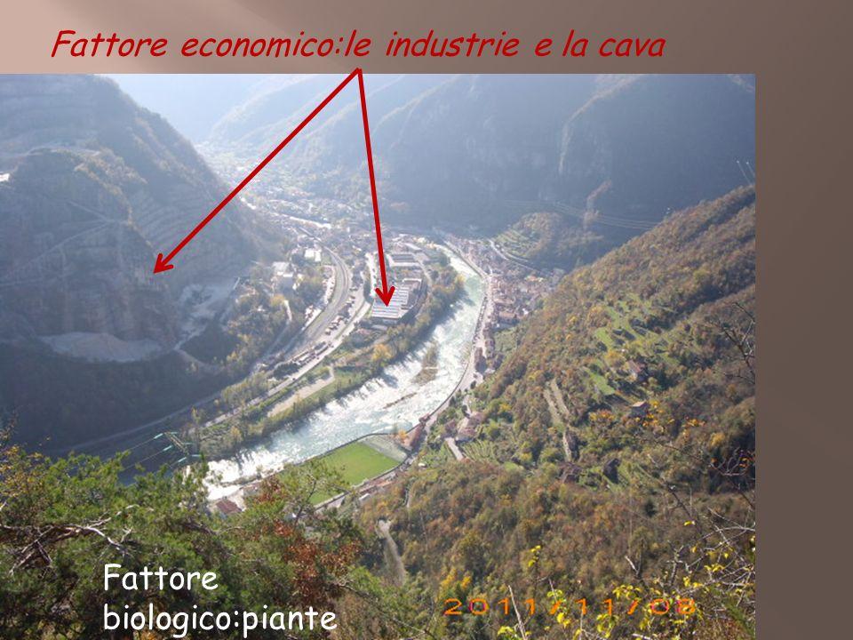 Fattore economico:le industrie e la cava Fattore biologico:piante