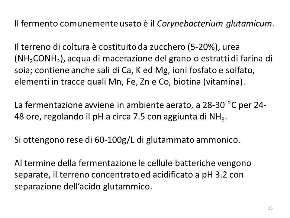 Il fermento comunemente usato è il Corynebacterium glutamicum.