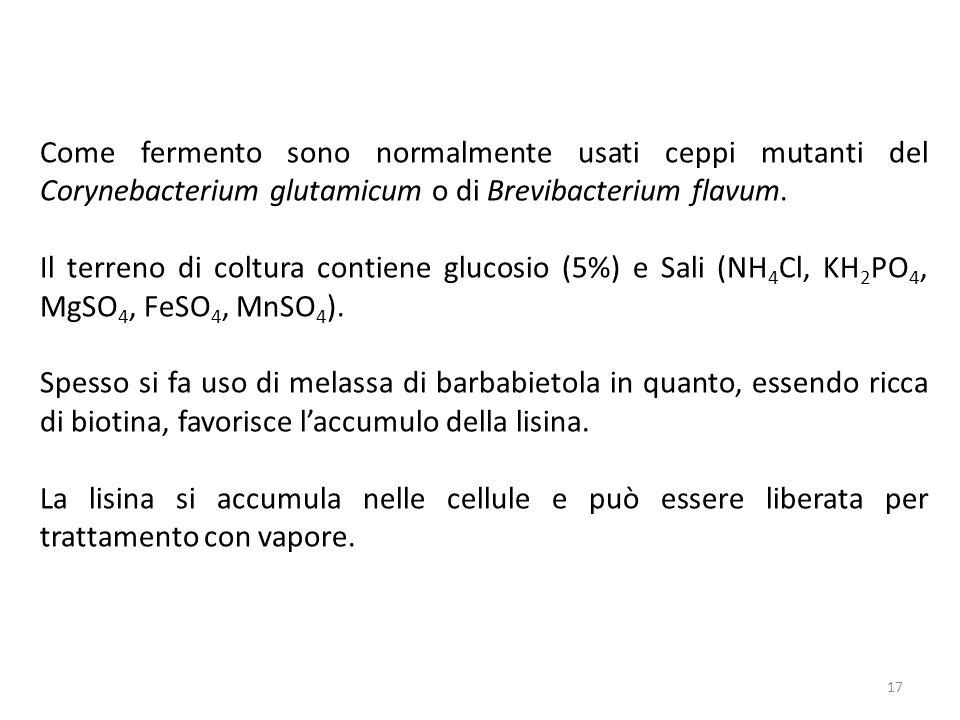 17 Come fermento sono normalmente usati ceppi mutanti del Corynebacterium glutamicum o di Brevibacterium flavum.