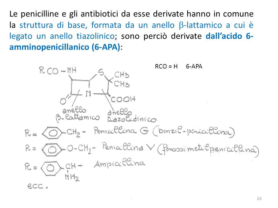 Le penicilline e gli antibiotici da esse derivate hanno in comune la struttura di base, formata da un anello -lattamico a cui è legato un anello tiazolinico; sono perciò derivate dallacido 6- amminopenicillanico (6-APA): RCO = H 6-APA 24