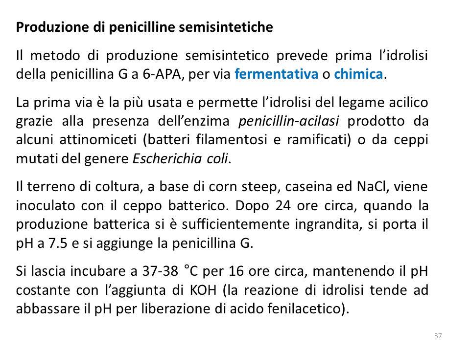 Produzione di penicilline semisintetiche Il metodo di produzione semisintetico prevede prima lidrolisi della penicillina G a 6-APA, per via fermentativa o chimica.