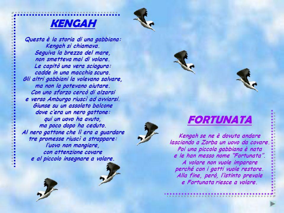 KENGAH Questa è la storia di una gabbiana: Kengah si chiamava.