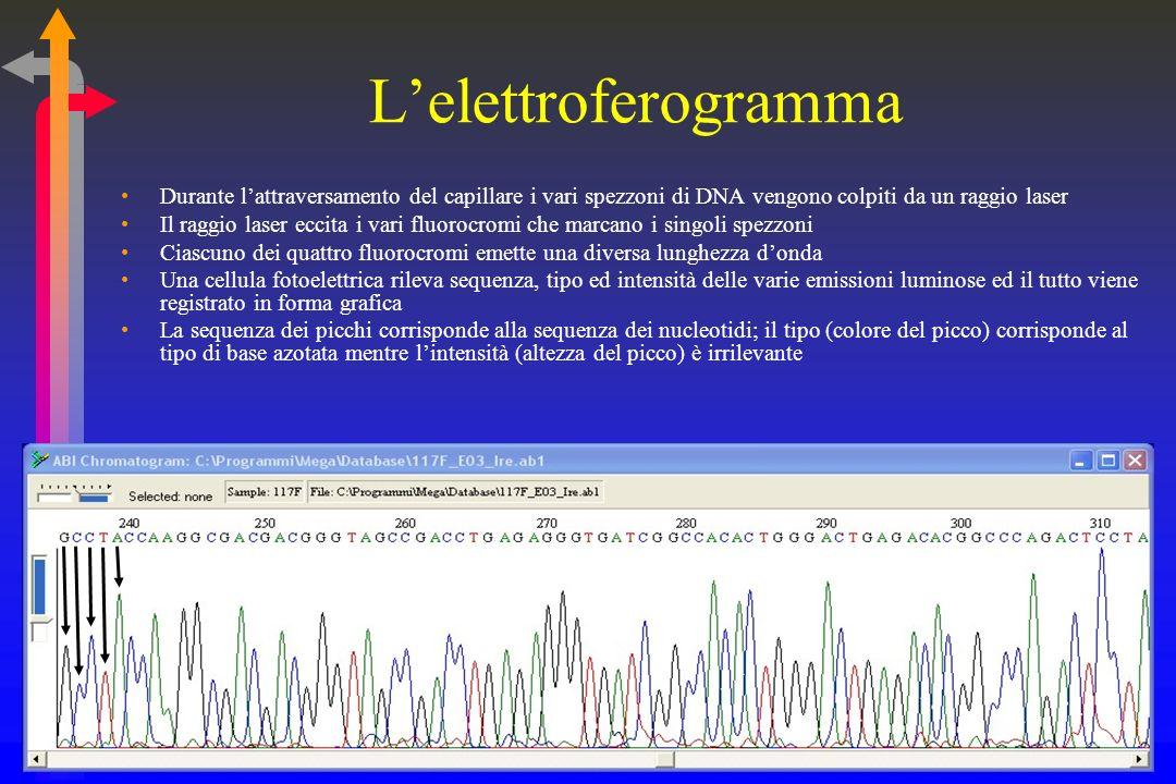 Il sequenziatore automatico E un apparecchio che, dopo aver prelevato il prodotto della PCR di sequenziamento, lo sottopone ad elettroforesi allintern