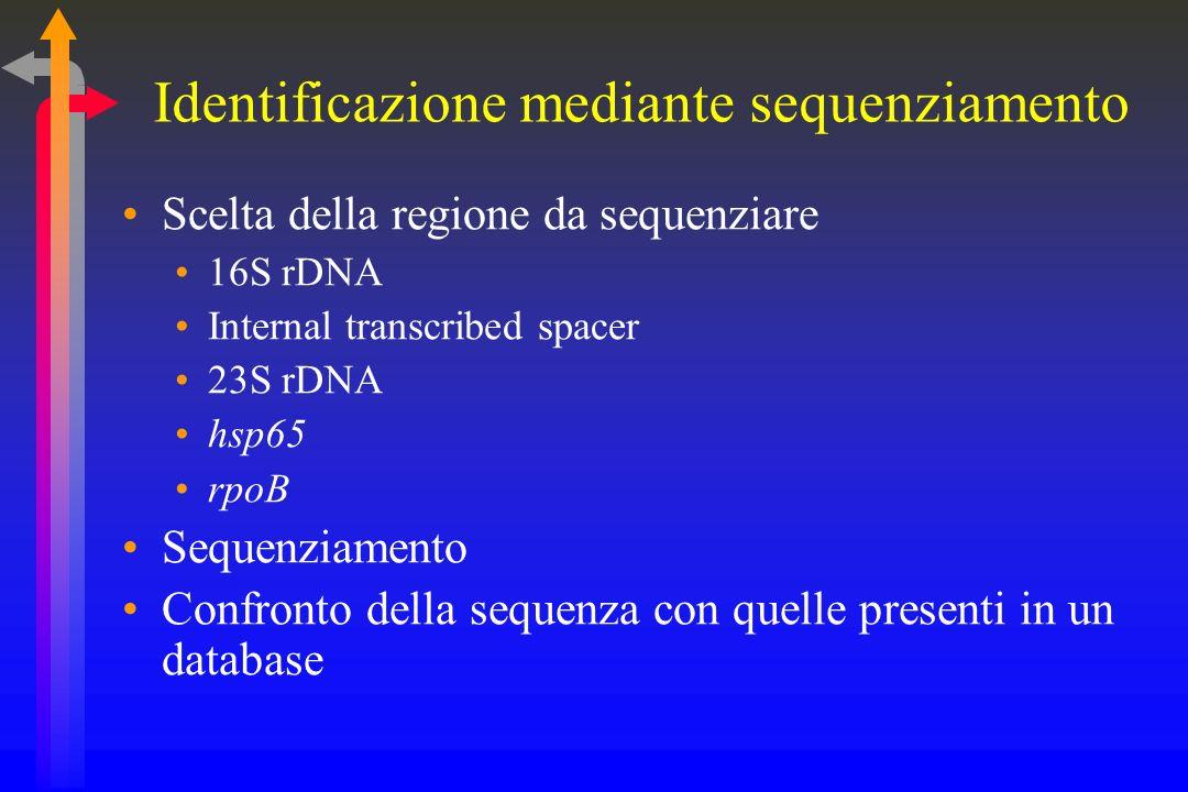 Il sequenziamento in microbiologia Identificazione Sequenziamento di regioni specie-specifiche Antibiogramma Sequenziamento di regioni in cui possono