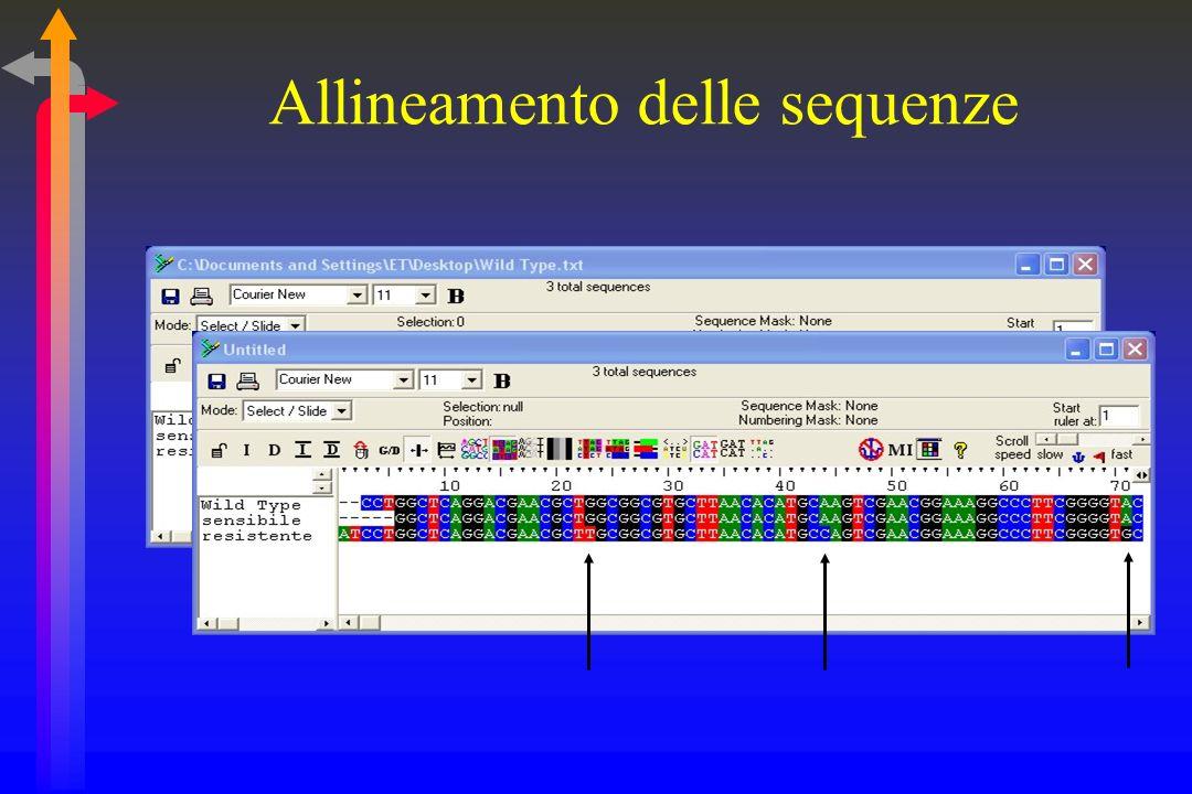 Allineamento delle sequenze