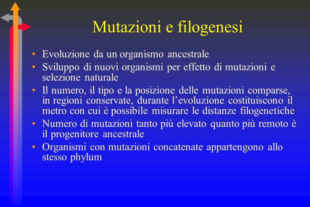 Le mutazioni Principali mutazioni Inserzione Delezione Sostituzione Conservativa Non conservativa Mutazioni: errori della natura? La selezione natural