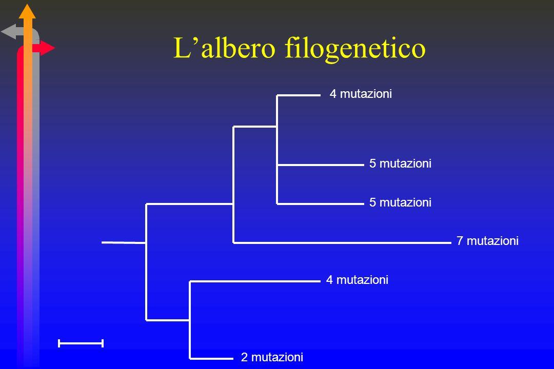 Regioni di studio Ideale: lintero genoma Compromesso accettabile:16S rRNA Sequenziamento Multiallineamento Costruzione dellalbero filogenetico