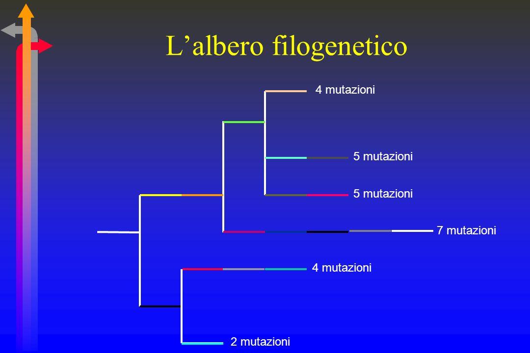 Lalbero filogenetico 2 mutazioni 5 mutazioni 7 mutazioni 4 mutazioni
