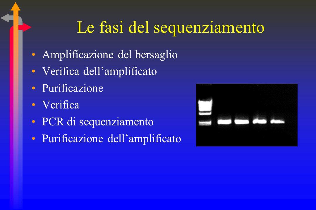 Lelettroferogramma Durante lattraversamento del capillare i vari spezzoni di DNA vengono colpiti da un raggio laser Il raggio laser eccita i vari fluorocromi che marcano i singoli spezzoni Ciascuno dei quattro fluorocromi emette una diversa lunghezza donda Una cellula fotoelettrica rileva sequenza, tipo ed intensità delle varie emissioni luminose ed il tutto viene registrato in forma grafica La sequenza dei picchi corrisponde alla sequenza dei nucleotidi; il tipo (colore del picco) corrisponde al tipo di base azotata mentre lintensità (altezza del picco) è irrilevante