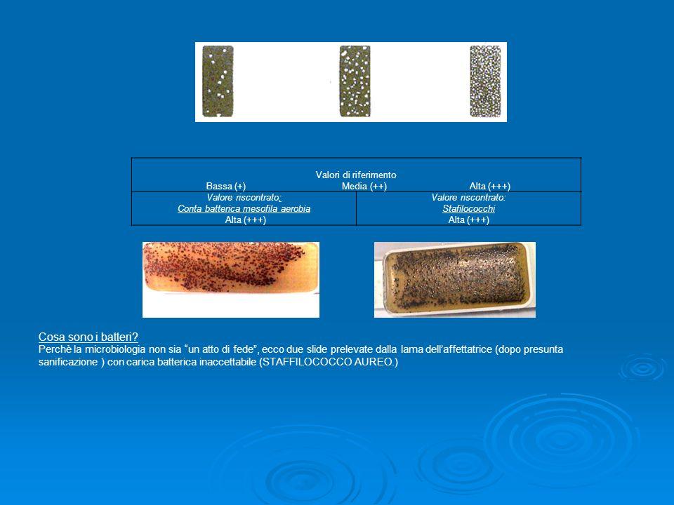Cosa sono i batteri? Perchè la microbiologia non sia un atto di fede, ecco due slide prelevate dalla lama dellaffettatrice (dopo presunta sanificazion