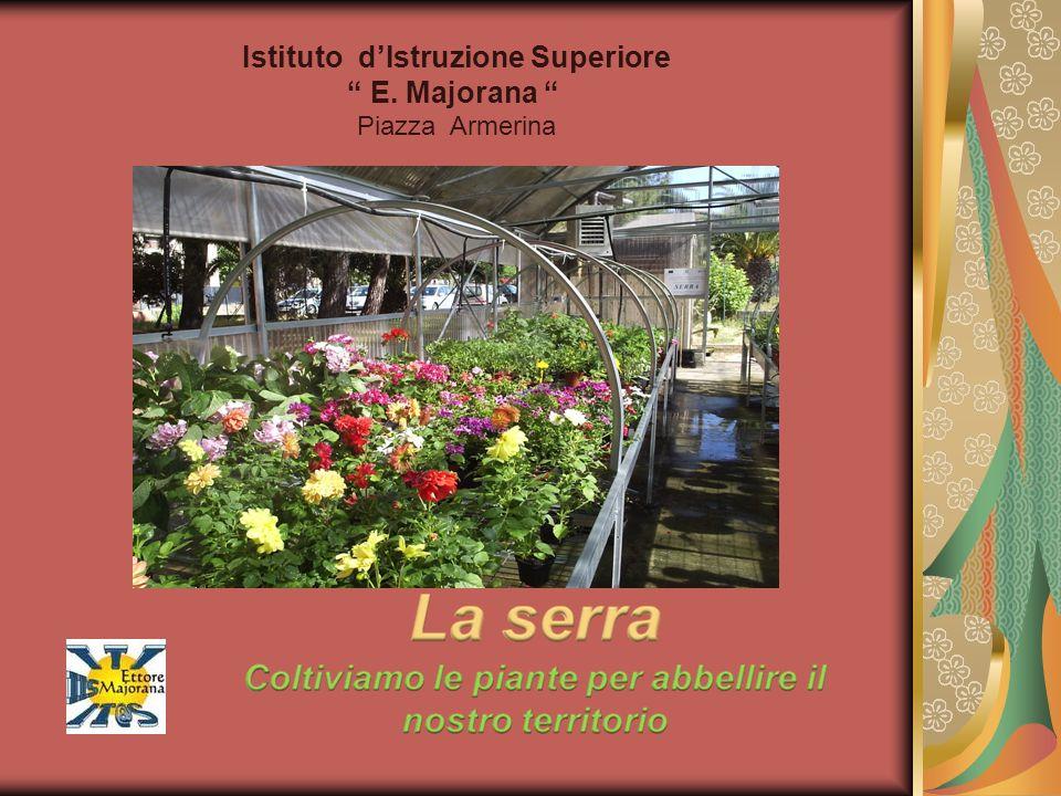 Agave Generalità: pianta succulenta originaria del Messico, diffusa in tutta l area mediterranea e in molti luoghi temperati del globo.
