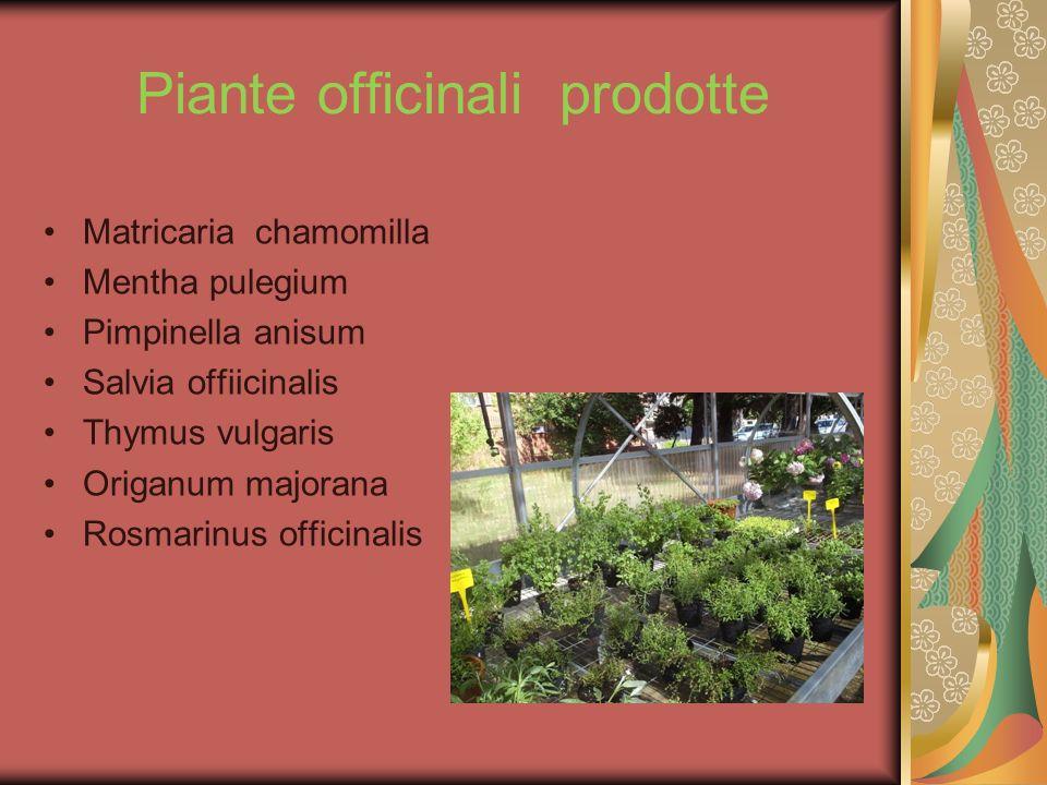 Piante officinali prodotte Matricaria chamomilla Mentha pulegium Pimpinella anisum Salvia offiicinalis Thymus vulgaris Origanum majorana Rosmarinus of