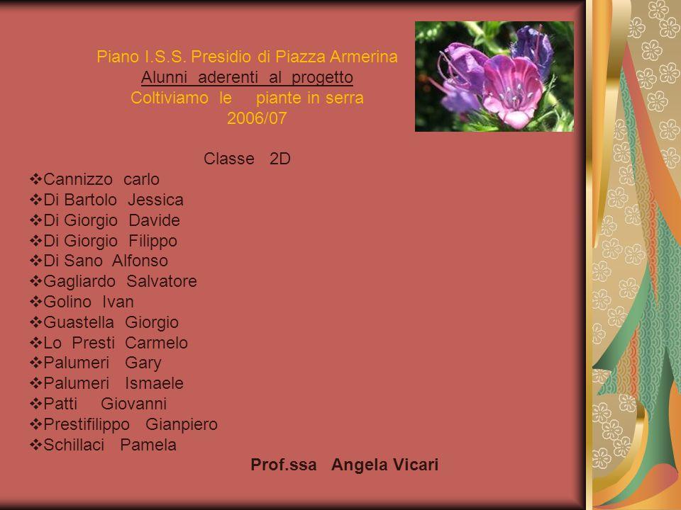 Piano I.S.S. Presidio di Piazza Armerina Alunni aderenti al progetto Coltiviamo le piante in serra 2006/07 Classe 2D Cannizzo carlo Di Bartolo Jessica