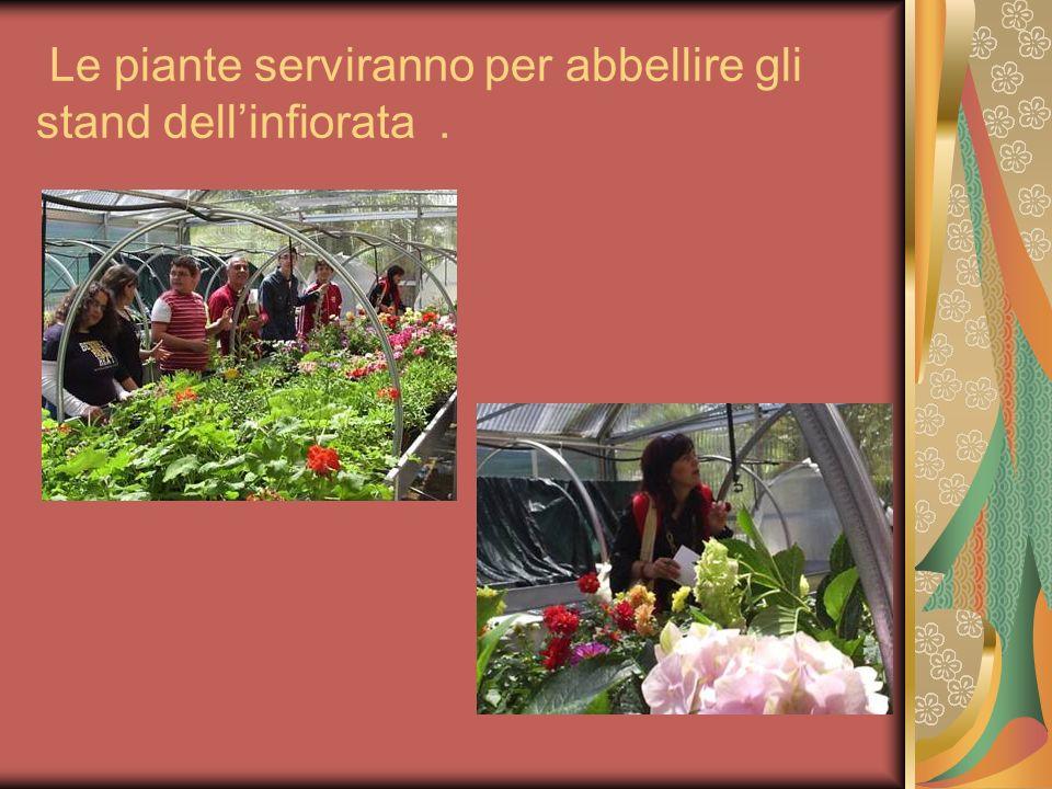 Le piante serviranno per abbellire gli stand dellinfiorata.