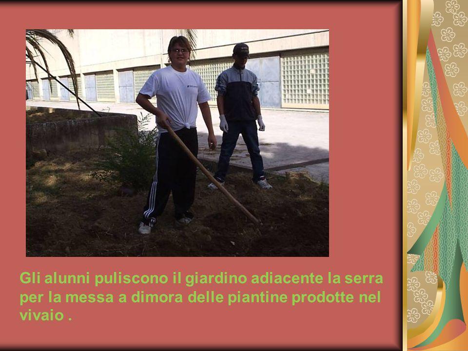 Gli alunni puliscono il giardino adiacente la serra per la messa a dimora delle piantine prodotte nel vivaio.