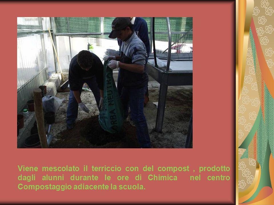 Viene mescolato il terriccio con del compost, prodotto dagli alunni durante le ore di Chimica nel centro Compostaggio adiacente la scuola.