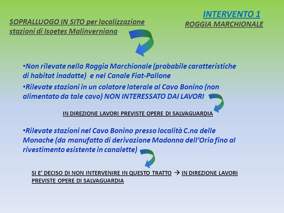 INTERVENTO 1 SOPRALLUOGO IN SITO per localizzazione stazioni di Isoetes Malinverniana ROGGIA MARCHIONALE Non rilevate nella Roggia Marchionale (probab