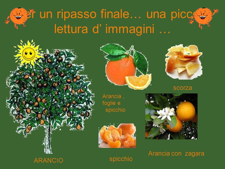 Eccolo pronto per essere ammirato Arancio è lalbero … arancia è il frutto, adesso è chiaro!