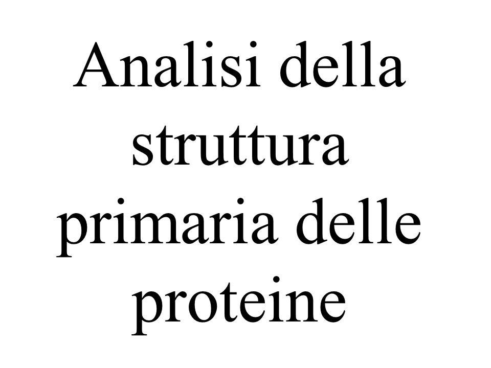 Analisi della struttura primaria delle proteine