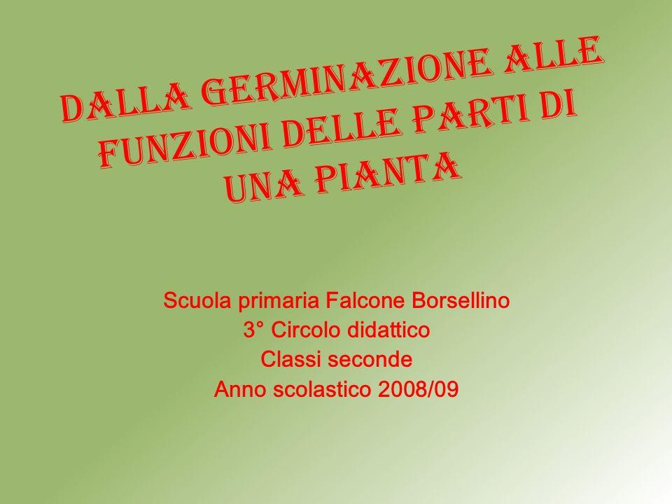 dalLa germinazione alle funzioni delle parti di una pianta Scuola primaria Falcone Borsellino 3° Circolo didattico Classi seconde Anno scolastico 2008/09