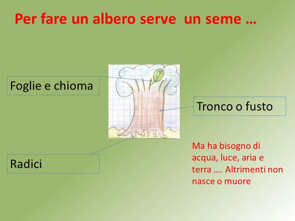 Per fare un albero serve un seme … Foglie e chioma Tronco o fusto Radici Ma ha bisogno di acqua, luce, aria e terra ….