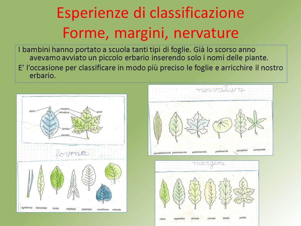 Esperienze di classificazione Forme, margini, nervature I bambini hanno portato a scuola tanti tipi di foglie.