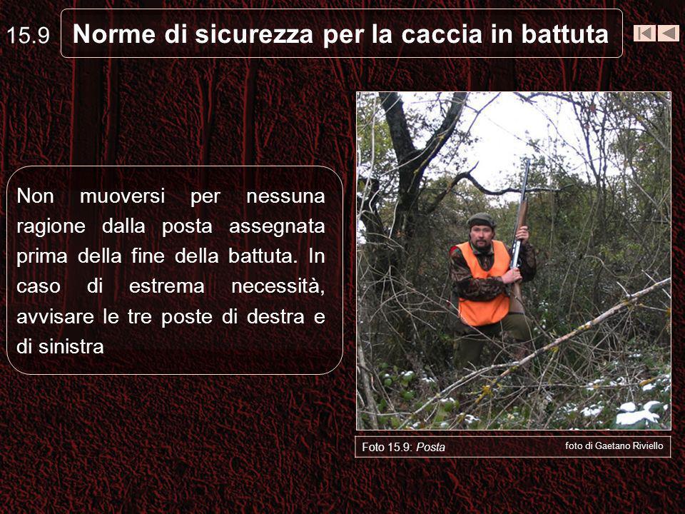 Norme di sicurezza per la caccia in battuta 15.9 Foto 15.9: Posta foto di Gaetano Riviello Non muoversi per nessuna ragione dalla posta assegnata prima della fine della battuta.