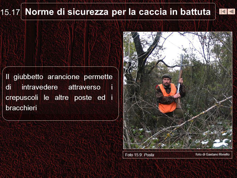 Norme di sicurezza per la caccia in battuta Foto 15.9: Posta foto di Gaetano Riviello Il giubbetto arancione permette di intravedere attraverso i crepuscoli le altre poste ed i bracchieri 15.17
