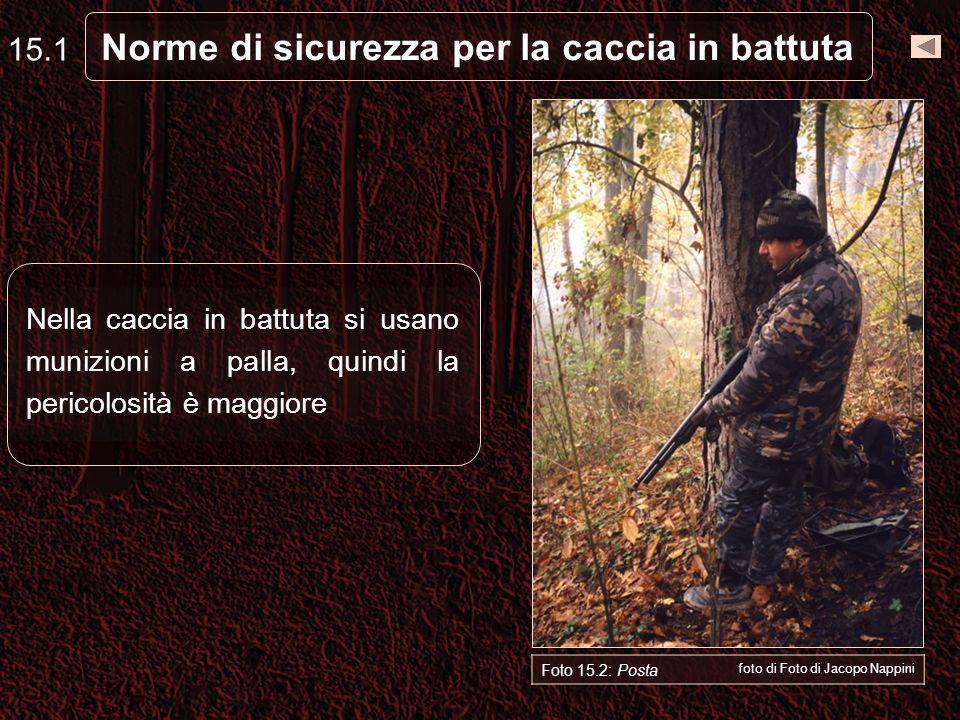 Norme di sicurezza per la caccia in battuta 15.1 Nella caccia in battuta si usano munizioni a palla, quindi la pericolosità è maggiore Foto 15.2: Posta foto di Foto di Jacopo Nappini