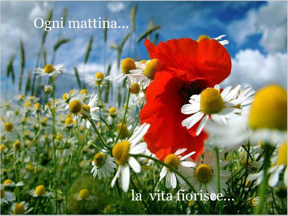la vita fiorisce... Ogni mattina...