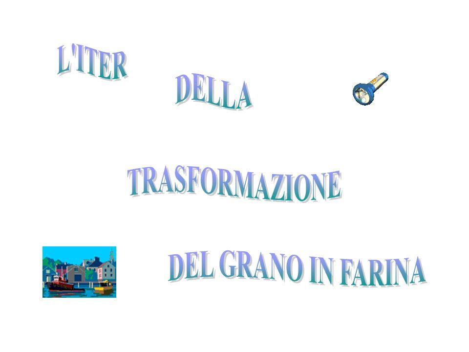 IL PANE AZZIMO INGREDIENTI 200 g DI FARINA DI GRANO TENERO; 100 g DI FARINA INTEGRALE; ACQUA; SALE.