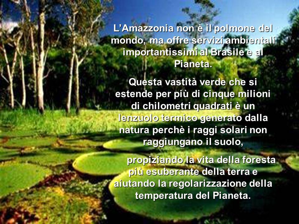 LAmazzonia non è il polmone del mondo, ma offre servizi ambientali importantissimi al Brasile e al Pianeta.