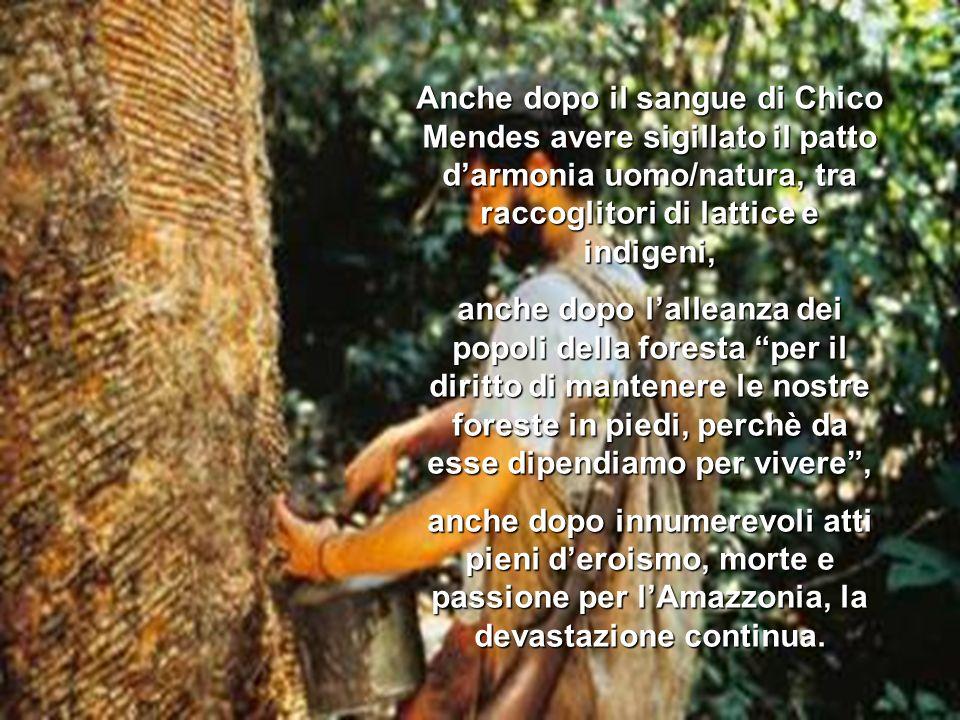 Anche dopo il sangue di Chico Mendes avere sigillato il patto darmonia uomo/natura, tra raccoglitori di lattice e indigeni, anche dopo lalleanza dei popoli della foresta per il diritto di mantenere le nostre foreste in piedi, perchè da esse dipendiamo per vivere, anche dopo innumerevoli atti pieni deroismo, morte e passione per lAmazzonia, la devastazione continua.