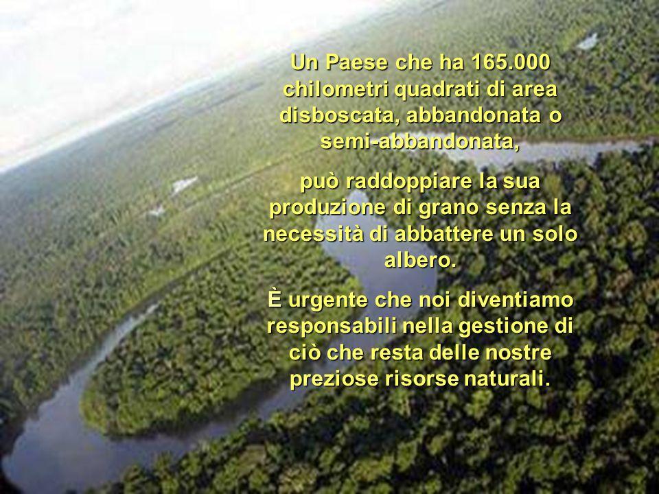 Un Paese che ha 165.000 chilometri quadrati di area disboscata, abbandonata o semi-abbandonata, può raddoppiare la sua produzione di grano senza la necessità di abbattere un solo albero.