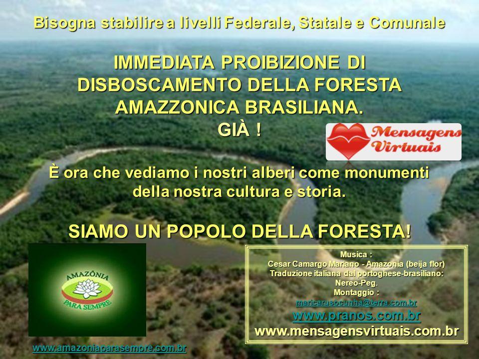 Bisogna stabilire a livelli Federale, Statale e Comunale IMMEDIATA PROIBIZIONE DI DISBOSCAMENTO DELLA FORESTA AMAZZONICA BRASILIANA.