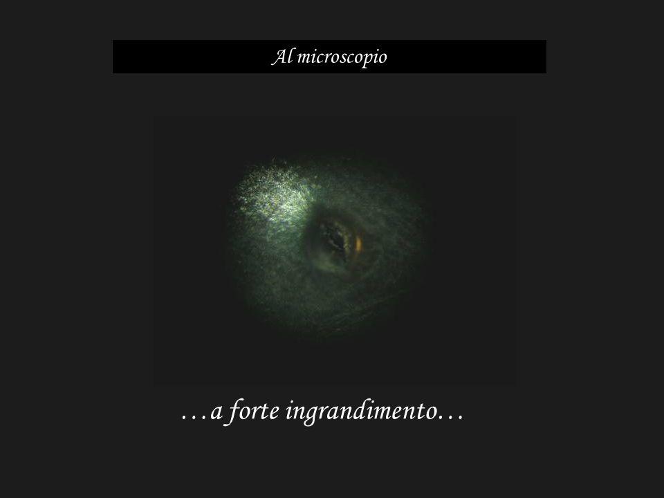 …a forte ingrandimento… Al microscopio