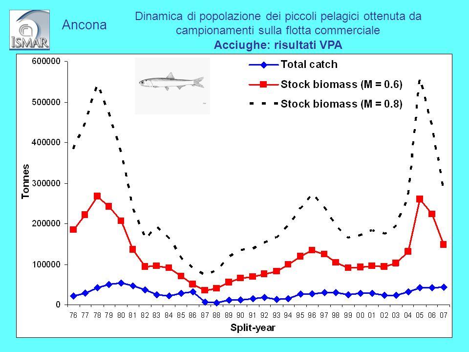 Dinamica di popolazione dei piccoli pelagici ottenuta da campionamenti sulla flotta commerciale Acciughe: risultati VPA Ancona