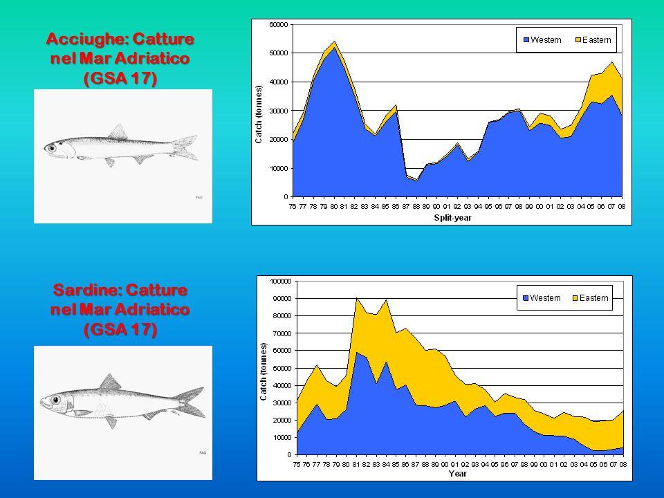 Acciughe: Catture nel Mar Adriatico (GSA 17) Sardine: Catture nel Mar Adriatico (GSA 17)