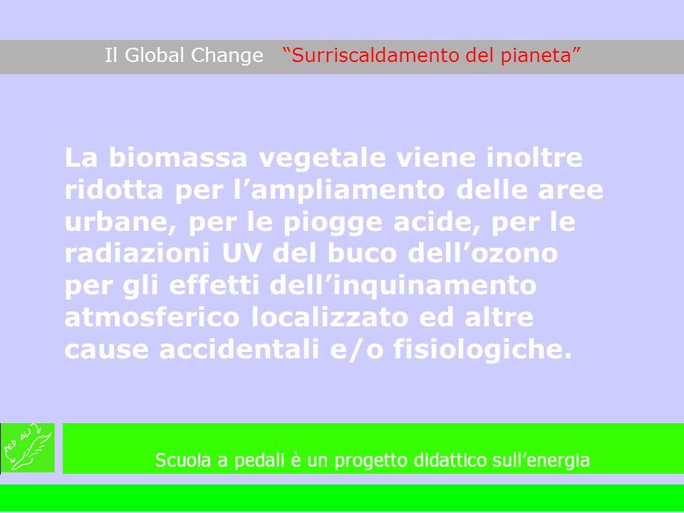 La biomassa vegetale viene inoltre ridotta per lampliamento delle aree urbane, per le piogge acide, per le radiazioni UV del buco dellozono per gli ef